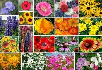 200 Mixed Wildflower All Perennial  Seeds Free Shipping Fresh Seed