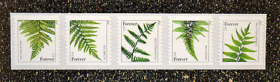 2015USA  #4973a-4977a  Forever Ferns (SSP) Coil Strip of 5 reprint (2015 date)