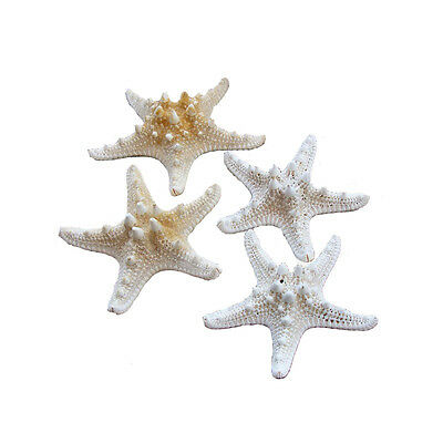 """Lot of 12 Nimi Natural Starfish  Married Decoration Home Decoration 1.5"""" - 2.7"""""""