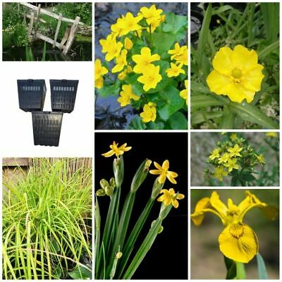 Pond Plants - The Yellow Collection - Bee Friendly Wildlife Pond Bog Marginals