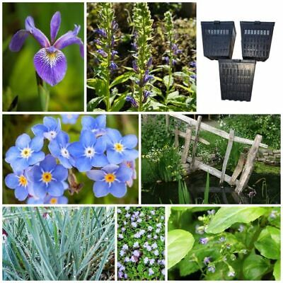 Pond Plants - The Blue Collection - Bee Friendly Wildlife Pond Bog Marginals