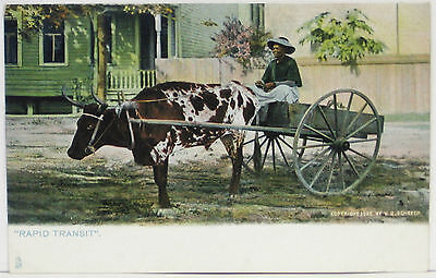 1900's BLACK AMERICANA Postcard ~ Tuck, RAPID TRANSIT, Woman with OX drawn WAGON
