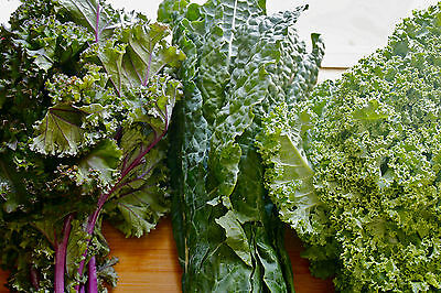 KALE, Heirloom Trio Mix (400seeds)- Organic Heirloom from Life-Force Seeds