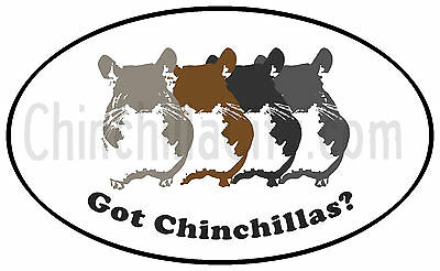 "Got Chinchillas? - Outdoor/ Car Magent - 6"" x 4""  -  Chinchilla Pet  Magnet"