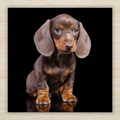 Dachshund Birthday Cards Sausage Dog Doxies Puppy - Various Designs FREEPOST