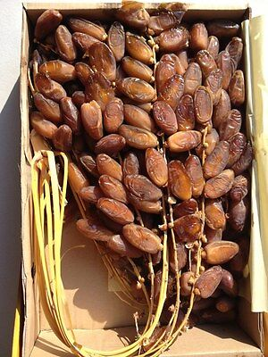 25Kg of fresh original Algerian Deglet Noor dates fruit on branches HIGH QUALITY