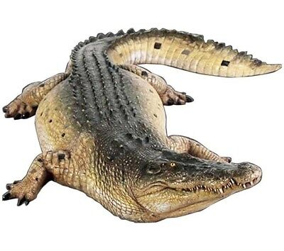 Crocodile Life Size State Mouth Closed Display Prop - Free Ship