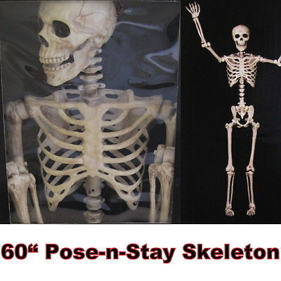 "60"" inch Pose-N-Stay Skeleton 5 FOOT/1.52 METRE Halloween Prop Life Size Bones"