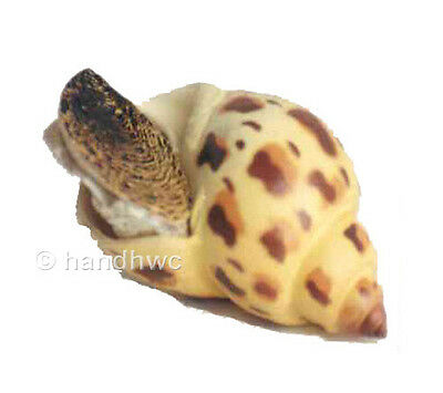 AAA 95833 Japanese Spotted Babylon Marine Snail Shell Model Toy Replica - NIP