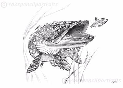 PIKE Art Drawing Print as seen on the inside cover of the book Willow Pitch 3
