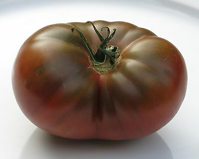 Tomato Black Krim (50seeds)- Organic Heirloom from Life-Force Seeds