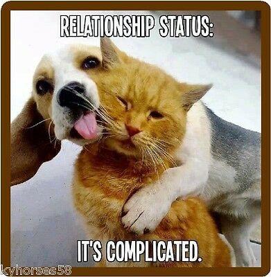Funny Dog Beagle Relationship Complicated Refrigerator Magnet