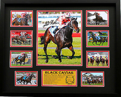 New Black Caviar Luke Nolen Signed Limited Edition Memorabilia Framed