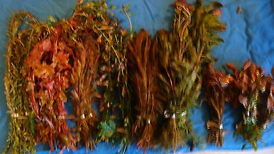 Pink And Red Aquarium Aquatic Fish Tank Plant Plants Coldwater Tropical Live
