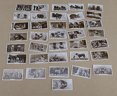 CAVENDERS LTD Cigarette Cards - Animal Studies Complete set of 36