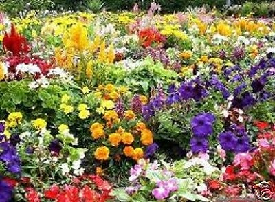 FLOWER SEEDS Wild Scented bee cottage garden plant mix perennial NO GRASS SEED