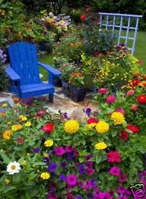 Garden FLOWER SEEDS 2500 plant mix seed pack Annuals Perennials Borders Cottage