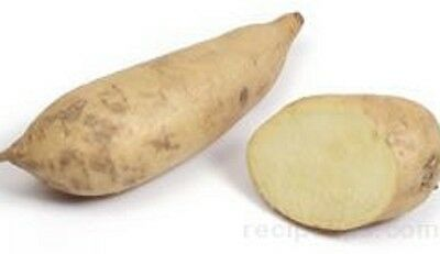 WHITE SWEET POTATO Ipomoea batatas root vegetable plant in 100mm pot *b