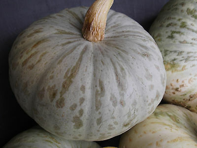 Pumpkin CROWN-Pumpkin Seeds-TASTY AUSTRALIAN CENTURION- 16 FRESH SEEDS.