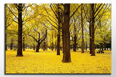 """Large 36 X 24"""" Free Delivery Yellow Trees Leaves Canvas Wall Art Picture Print"""