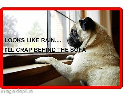 Funny Fawn Pug Dog Rainy Day Refrigerator / Tool Box Magnet Gift Card Insert