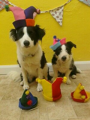 Dogs Birthday Party Hats . Handmade by Mrs Nibbles from felt ideal fancy dress