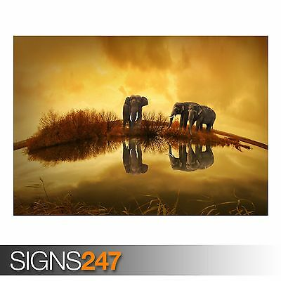 THAILAND ELEPHANTS (3333) Animal Poster - Photo Poster Print Art A0 A1 A2 A3 A4