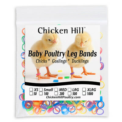 "100 Chick Leg Bands ~ 1/4"" Size 4 Poultry Chickens Ducks light geese Day Old"