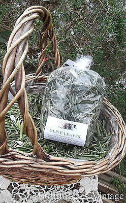 OLIVE LEAVES dried organic eco 200+ grams craft/plant dye/medicinal/magic use