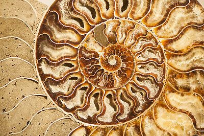 Beautiful Abstract Fossil Canvas Picture #924 Stunning Photography A1 Canvas