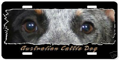 "Australian Cattle Dog #2  ""Eyes Have It""  License Plate"