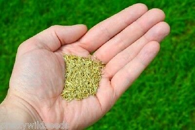 Wonder Fast Grow Lawn Grass Seed Patching or full lawn DEFRA CERTIFIED 1-100 KG