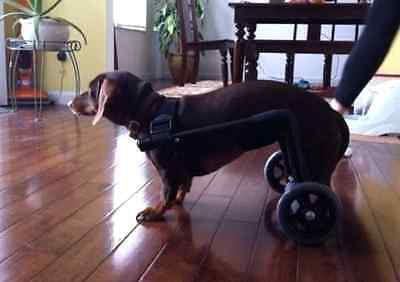 Dog Wheelchair Fully Assembled!!!