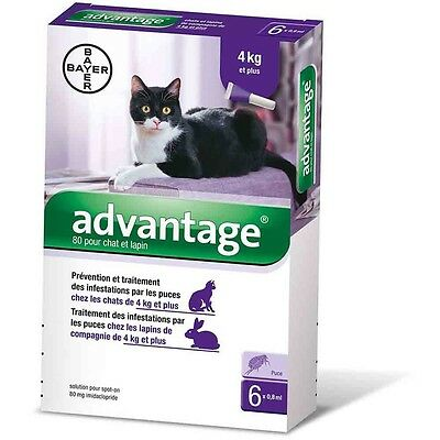Advantage 80 Chat de plus de 4kg