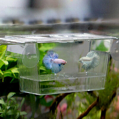 Pet Aquarium Fish Tank Guppy Double Breeding Breeder Rearing Trap Box Hatchery