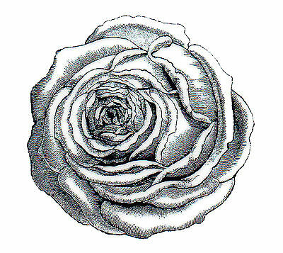 Rose Engraving Deep Red Cling Rubber Stamp