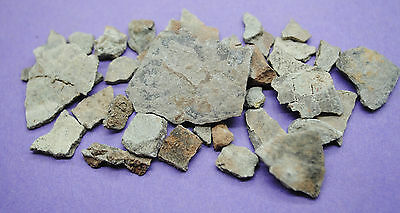 Group of fossilized Hadrosaurus egg shell fragments, Late Cretaceous period