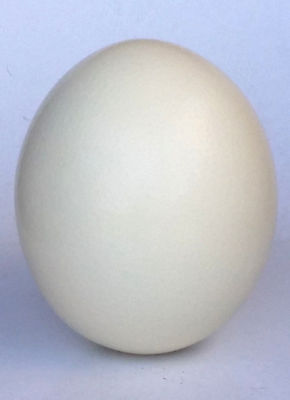 Oshtrich Egg Grade A Blown South African Eggs Ideal For Painting Carving