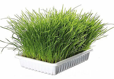Trixie Cat Grass Refill For 4232 Bag/approx 100g
