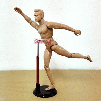 Human Drawing Model Anatomy Body Muscle Artist Art Figure Display Craft 12""