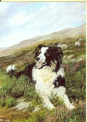 Illustrated Breeds Note Cards (blank) NOS Border Collie