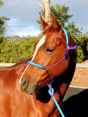 Padded rope halter and lead set, cob  full XL full aqua and purple, STUNNING!!!