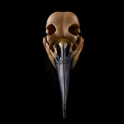 Retro YLW Oystercatcher Model Anatomy Skull Head Drawing Resin Collectable