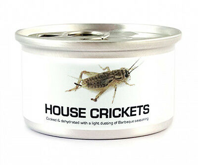 Edible Dehydrated Canned Small Crickets Salted Exotic Insects Bugs Thai Food