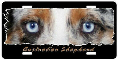 Australian Shepherd   blue eyed  The Eyes Have It License  plate