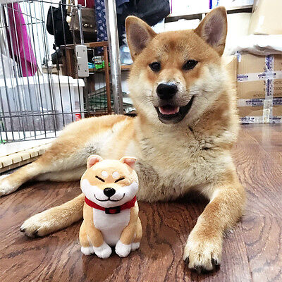 Mini Shiba Inu Lovely Muco Itoshi no Muco Doge Cosplay Doll Toy Plush Sa