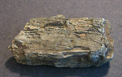 """Petrified Wood BC Canada 40grams 2"""" Craft Collect"""