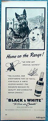 1952 Black & White Scottie Westie Terriers Saddle Home On The Range Dennis ad
