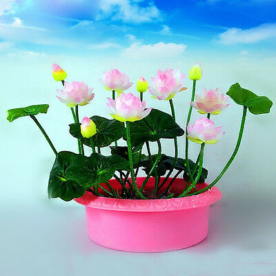 20 Pcs White Pink WATER LILY MINI LOTUS Seeds Flower Plant