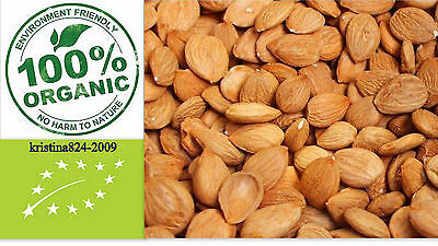 Organic BITTER Raw APRICOT Kernels Seeds Non Chemical Non GMO- 200 g